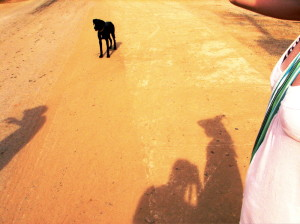 black dog on yellow dirt road